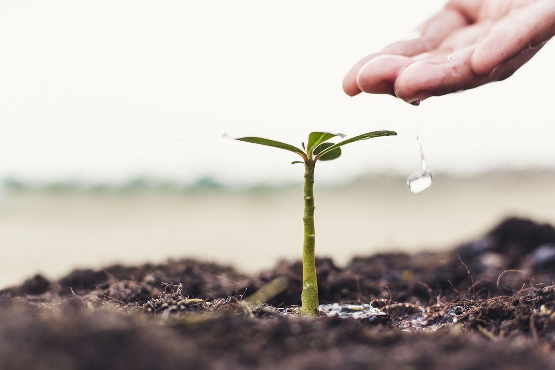 Economic Regeneration Plan: Change to Grow and ReStart Schemes